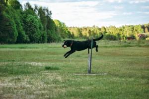 Joshua hoppar